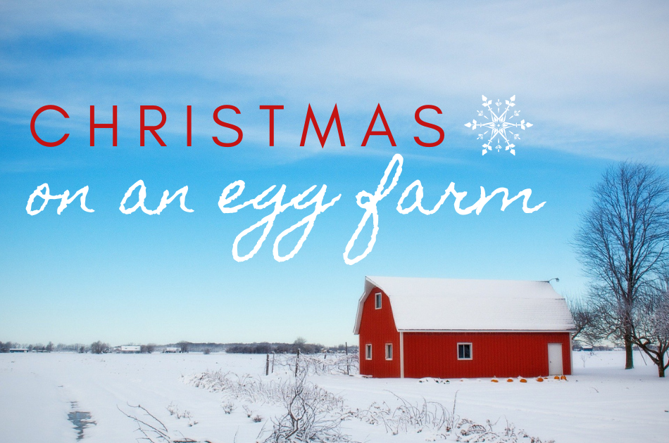 christmas_on_an_egg_farm